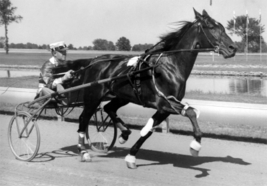 DVD - HARNESS RACING Vintage Racing 1932-1966...HOOT MON/Adios/PORTERHOU... - $34.99