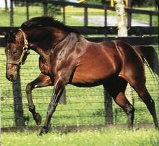 DVD - LEGENDS That Live On: Successful Stallions of the Past - RARE MAST... - $34.99
