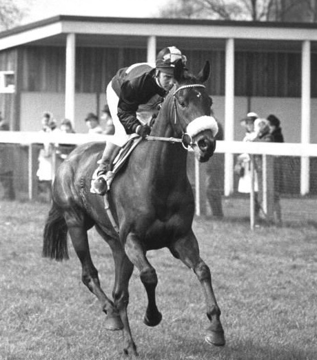 DVD - Story of MILL REEF...1970 U.S. - Bred EUROPEAN CHAMPION...Paul Melon