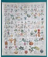 BOTANY Poppy May Apple Camphor Garcinia Dammar Gamboge - 1843 HC Color P... - $39.60