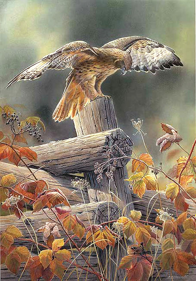 Red TaiLed Hawk Cross Stitch Pattern***LOOK***