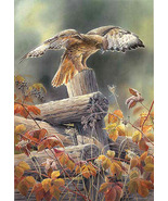 Red TaiLed Hawk Cross Stitch Pattern***LOOK*** - $4.95