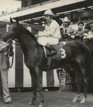 DVD - ALABAMA STAKES 1952-1987...33 Races in their ENTIRETY!! GAMELY/Cic... - $34.99