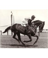 DVD - AUSTRALIAN HORSE RACING HISTORY: Horses/TRAINERS/Owners/BREEDERS/S... - $39.99