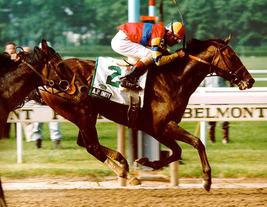 DVD - Entire 1992 TRIPLE CROWN Race Broadcast-LIL E TEE, PINE BLUFF & A.... - $44.99