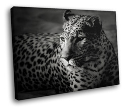 Leopard Black-white Magnetic look 30x20 Framed Canvas Art Print - $19.95