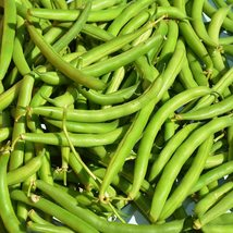 Bean Seeds - Bush - Provider (Treated) - Vegetable Seeds - Outdoor Living - $34.99+