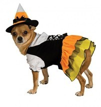 Candy Corn Witch Dog Costume - €16,11 EUR+