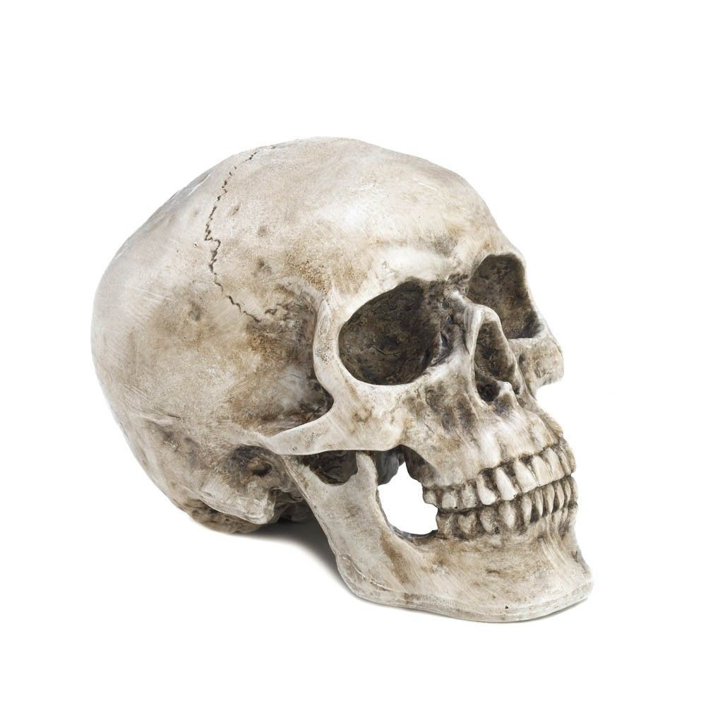 Realistic Human Skull Replica Macabre Halloween Gothic Spooky Dead Decor