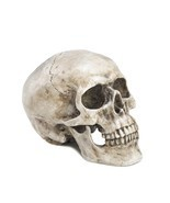Realistic Human Skull Replica Macabre Halloween Gothic Spooky Dead Decor - $32.62