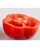 50 Burgess Stuffing Tomato Seeds  - $4.15
