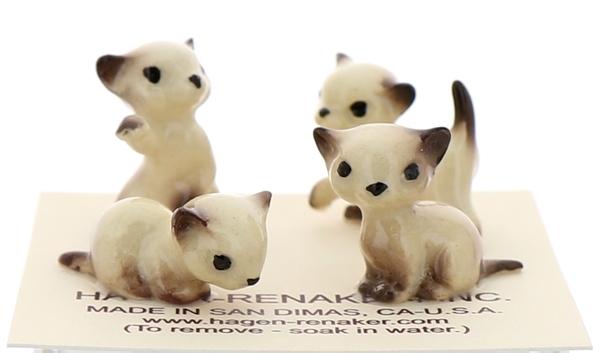Tiny siamese kittens32