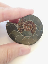 Ammonite Shell Fossil Spellbound By Dovemacob g... - $21.00