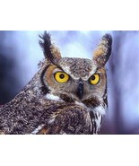 Long eared owl clip art thumbtall