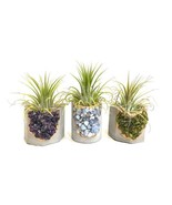 Geode Concrete Planter with Air Plant - Octagon - $30.00