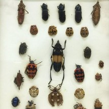 """Insect Entomology Lot Collection 27pc Specimen Beetle 8.5""""x6.5"""" Frame image 2"""