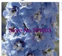 Magic Fountains Sky Blue w/ White Bee Delphinium Flower Seeds / Perennia... - $3.86