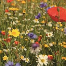 SHIP From US Wildflower Birds & Butterfly Mix Seeds (7g+ Seeds) UTS2 - $24.99