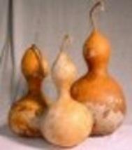 Gourd - Birdhouse Bottle - Non-Hybrid - Non-GMO - St. Clare Heirloom Seeds - $2.49