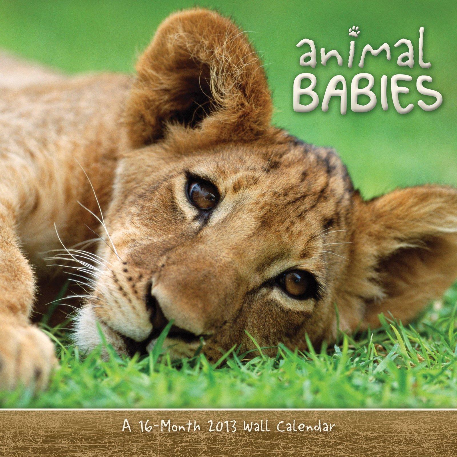 Animal Babies 2013 Wall Calendar DateWorks - $9.79