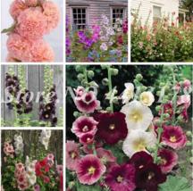 200 Pcs New Double Hollyhock Flower Mixed Perennial Garden Rare Bonsai A... - $2.72