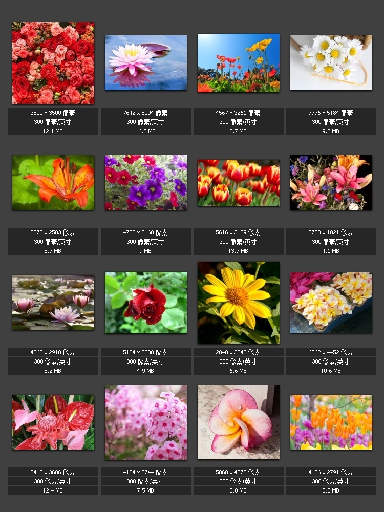 Flower Highlights HD Picture Garden Flowers Colorful Gallery Photographs Photo