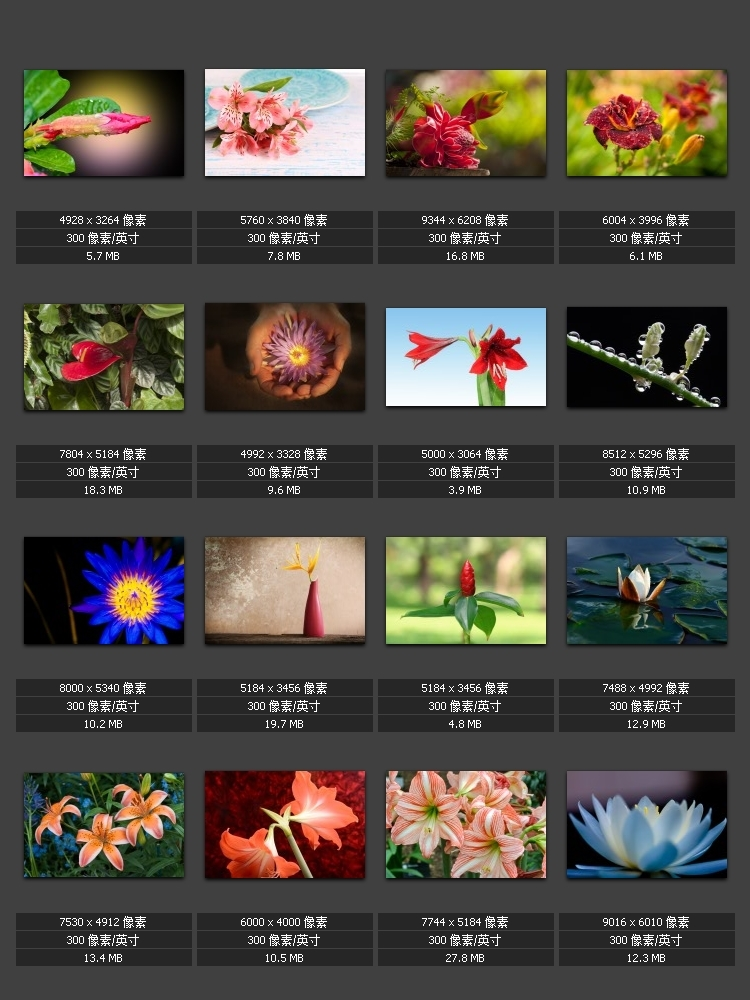Macro Cam Photography Flower Painting HD Plant Natural Gallery Decorative Photo