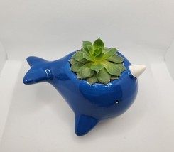 """Narwhal Whale Planter with live Succulent, 5"""" blue glazed ceramic animal pot image 3"""