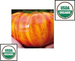 20 semi grande Arcobaleno Pomodoro ORGANICO Cimelio di famiglia grande b... - $1.10
