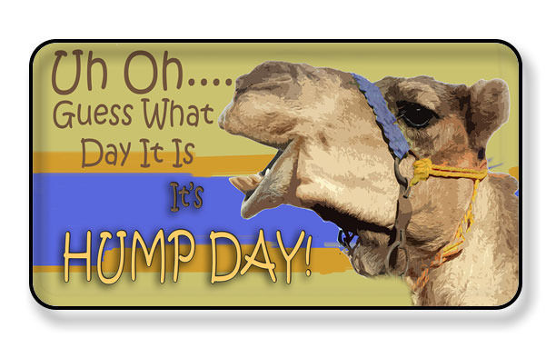 Hump Day Toys : Uh oh guess what day it is hump camel magnet package