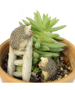 2 pcs Hedgehog Ladder Fruit Fairy Garden Terrarium Dollhouse Decor Figur... - $11.99