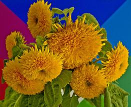 sunflower, TEDDY BEAR, yellow flower, TEDDYBEAR, 15 seeds - $9.99