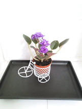 MiniGardenn - Novelty African Violet plant -with Mini Bicycle (Free Ship... - $362,33 MXN