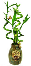 5 Stems Spiral Lucky Bamboo in Handmade Rose Vase (FREE SHIPPING) - $36.99