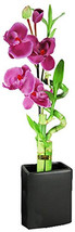 Set of 2 Live Spiral 3 Style Lucky Bamboo with Artifical Orchid Flower T... - $26.99