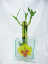 Live 3 Style Lucky Bamboo Plant Arrangement with 3D Beauty Glass Vase (F... - £15.54 GBP