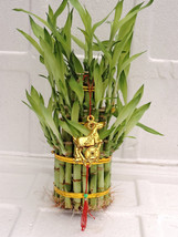 "3 Tier 4"" 6"" 8"" Top Quality Lucky Bamboo and a unique decoration (FREE S... - $23.99"