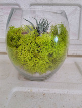 Succulent Terrarium with Moss and River Rocks (FREE SHIPPING) - $343,26 MXN