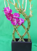 lucky bamboo 8 stalks braided 10''  inches tall and 3 ''  ceramic pot ta... - $390,55 MXN