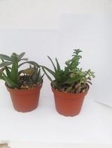 Two Gardens Cactus Garden in 4'' Pot - $18.70