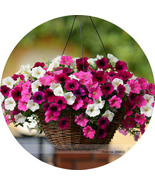 Anging bonsai petunia flower seeds profess2ional pack 200 seeds pack plant all seasons thumbtall