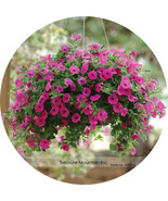 Nging bonsai petunia flower seeds professi3onal pack 2003 seeds pack plant all seasons thumbtall