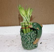 Live 10/4-6'' style Party Bamboo Plant Arrangement w/dolphin 4''Ceramic Vase-... - ₨789.44 INR