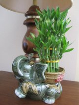 """Jumbo Size Elephant Ceramic Vase with 3 Tier 4"""" 6"""" 8"""" Quality Lucky Bamboo Plant - ₨2,545.90 INR"""