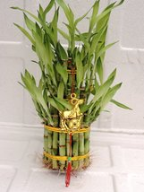 """3 Tier 4"""" 6"""" 8"""" Top Quality Lucky Bamboo For Feng Shui (Total About 38 S... - $16.99"""