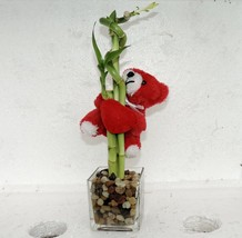 Valentine-Live 3 Style Lucky Bamboo Plant Arrangement with glass Vase/de... - £13.88 GBP