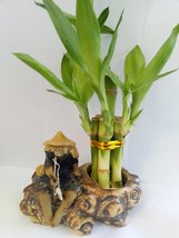 Lucky Bamboo Fortune with Fishman Ceramic Pot Unique From Jm Bamboo - £10.80 GBP