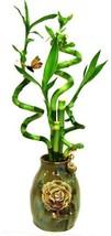 GoGoGreen88 - 5 Stems Spiral Lucky Bamboo in Handmade Rose Vase - £25.66 GBP