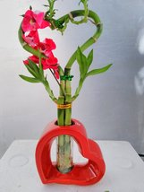 Jmbamboo-live Heart 5 Style Lucky Bamboo Arrange w/ Hand Paint Red Ceram... - £11.57 GBP