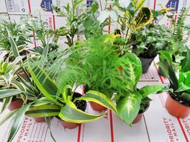 "Terrarium & Fairy Garden Plants - 5 Plants in 4"" Pots Unique-from Jmbamboo - $438,61 MXN"